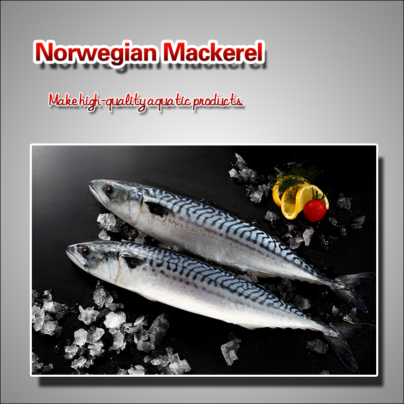 Norwegian mackerel